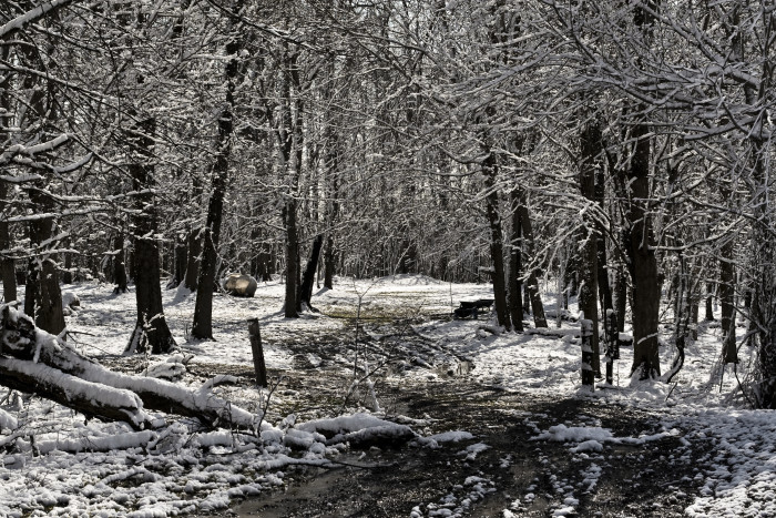 10. Covered in snow, these Mississippi woods make for a breathtaking sight.
