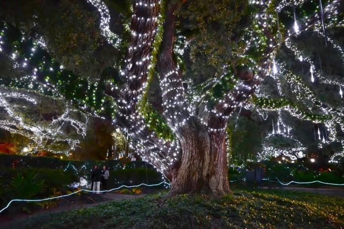 1. Christmas in the Oaks in New Orleans---perhaps the sweetest part is when the local students create the Christmas Trees!