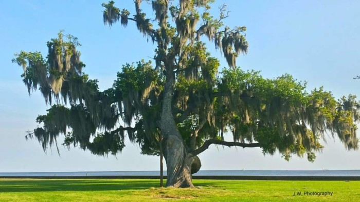 1. Where are the most beautiful trees in the nation?