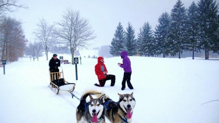 2. Go dog sledding at the Nemacolin Woodlands Resort.