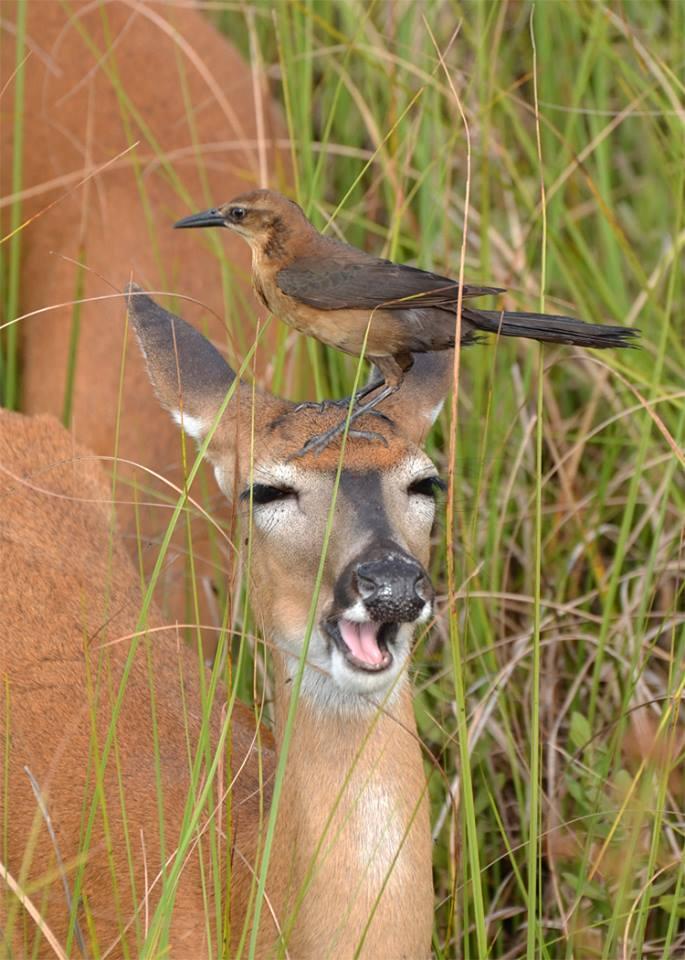 22. Rhett Butler captured a photo of this oblivious deer in Big Cypress National Preserve.