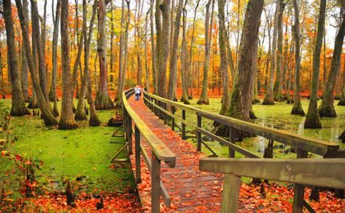 11. The Natchez Trace Cypress Swamp