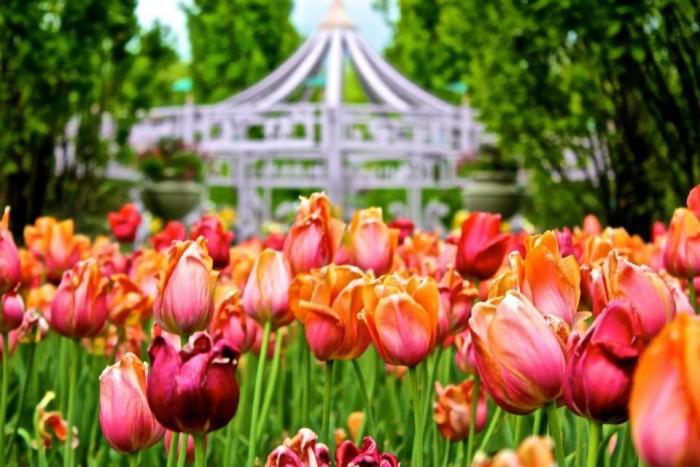 8. April: Celebrate spring at Thanksgiving Point's Tulip Festival.