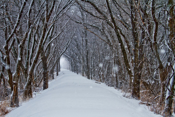 9. The Clive Greenbelt Trail is truly magical as the snow falls on a peaceful winter afternoon.
