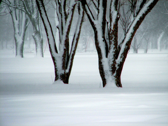 """4. The photographer calls this """"White Forest."""""""