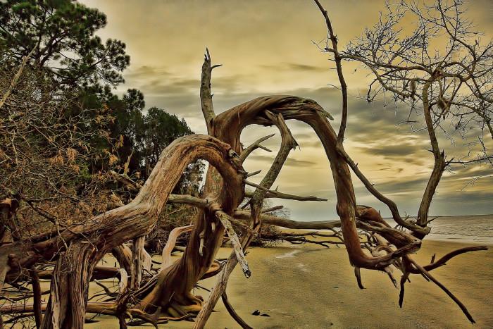 7. Driftwood Beach - Jekyll Island, GA 31527