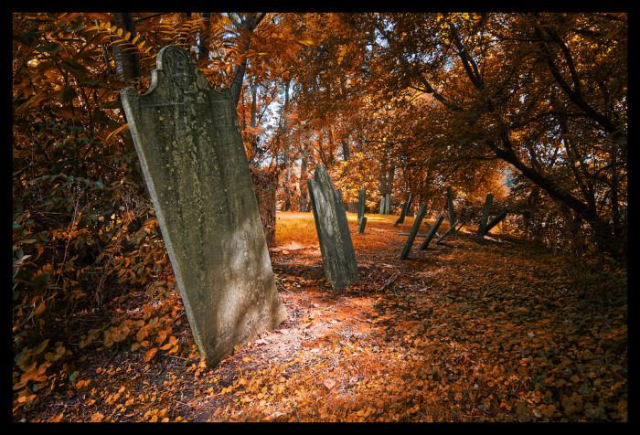 12.The Orange Graveyard.