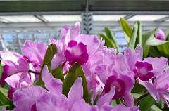 12.Catch spring at the Missouri Botanical Garden in St. Louis