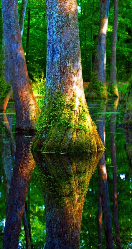12. Peaceful Cypress Swamps