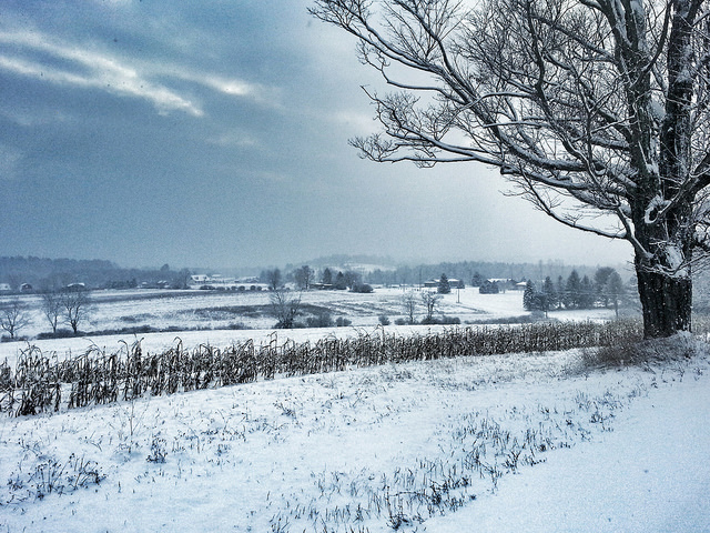 2. The fields in Wayne county seem to stretch forever, and they are blanketed in peaceful snow.