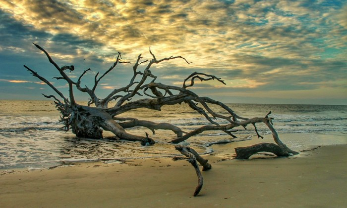 12. Driftwood Beach by Lisa Westberry