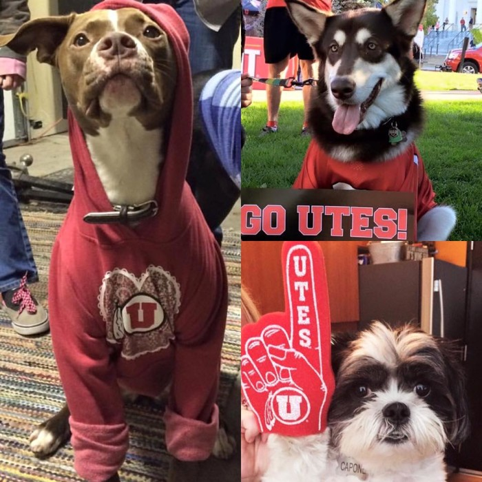 10. You wore your Utes hoodie to the BYU football game party hosted by your family in Utah County.