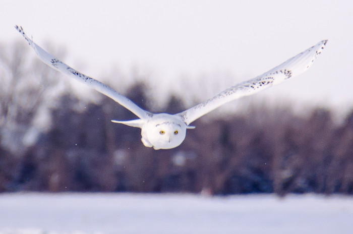 And in Vermillion you might be lucky enough to spot an owl like this one!