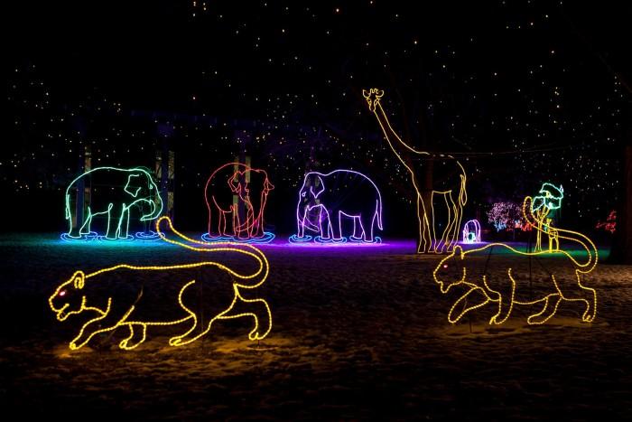 1. Zoo Lights (Denver)