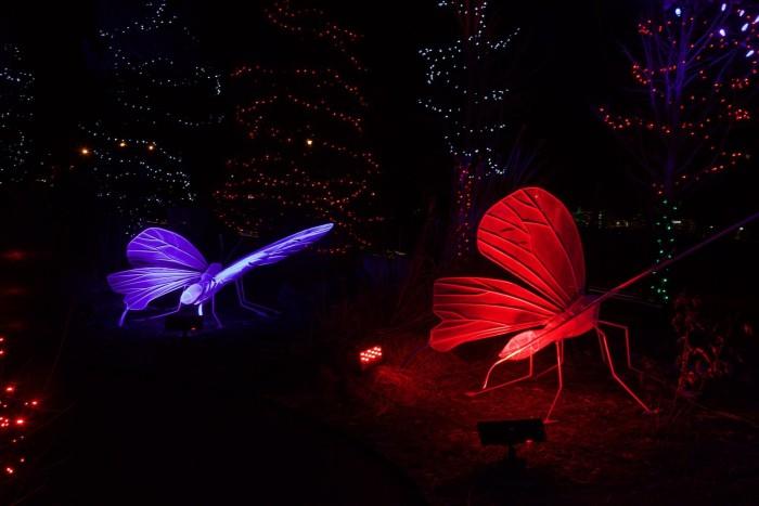 6. Living Lights (Westminster)