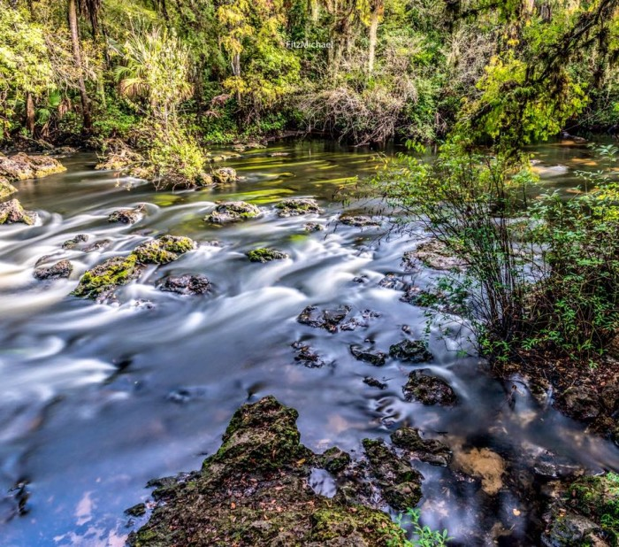 16. Thank you, Fitz Michael, for this shot taken in Hillsborough River State Park.