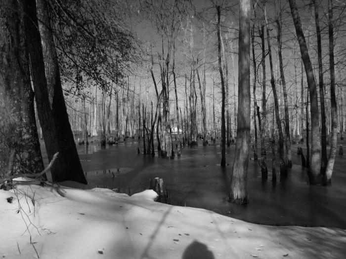 10. 'Beaver Dam in Winter'