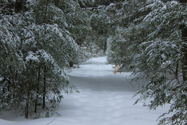 8. Hike in Warren County's Allegheny National Forest.