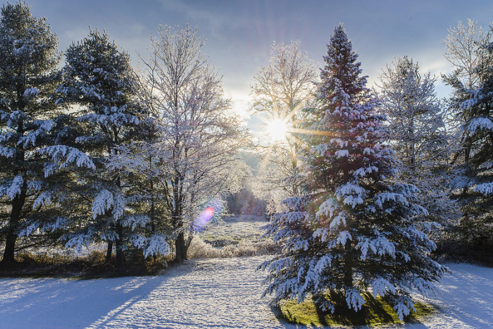 11.  Morning Snowfall