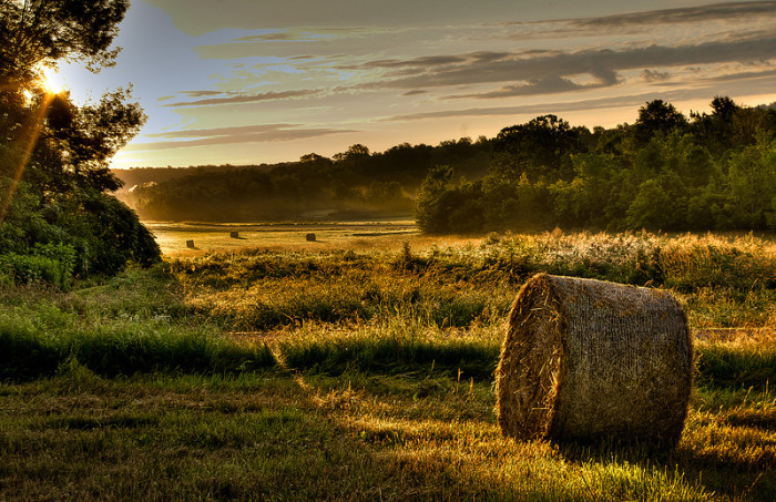 12.  Early morning hay in Charlotte