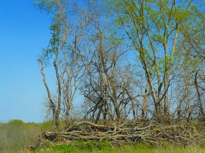 13.Bonanza Conservation Area, Cowgill
