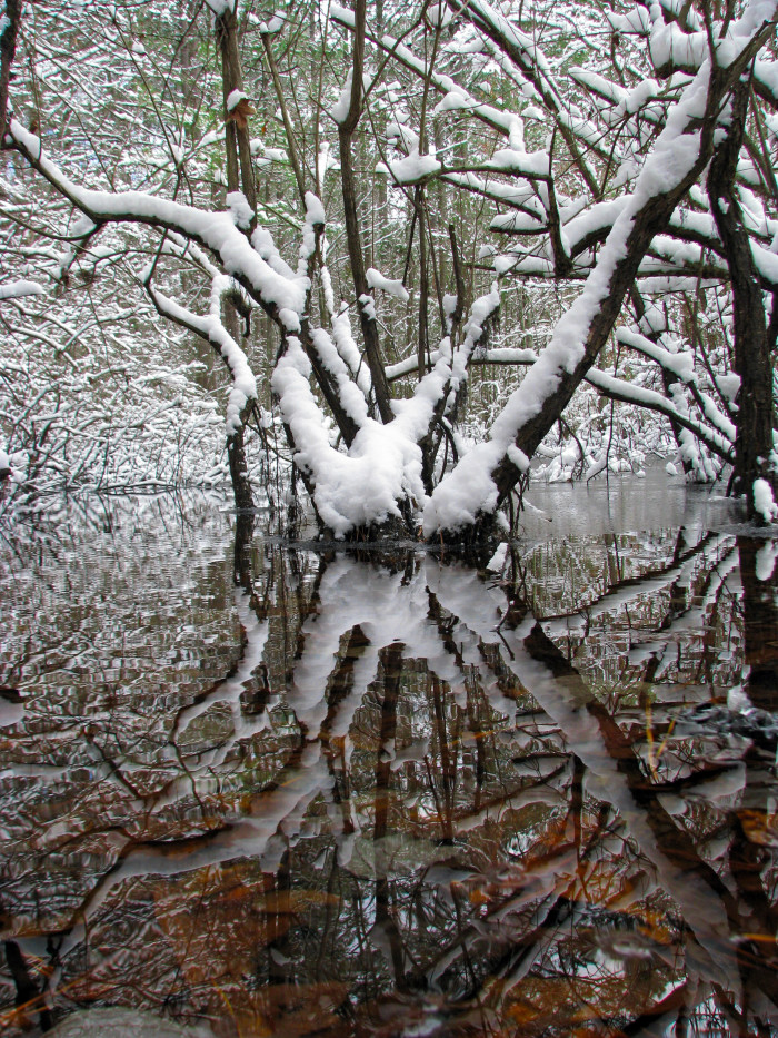 13. An icy, snow-covered tree takes center stage at the Noxubee Wildlife Refuge.
