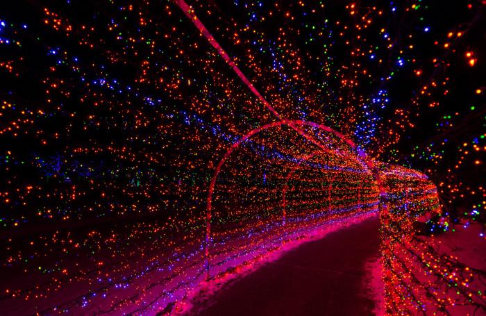 14.1. St. Louis Missouri Botanical Garden, Garden Glow