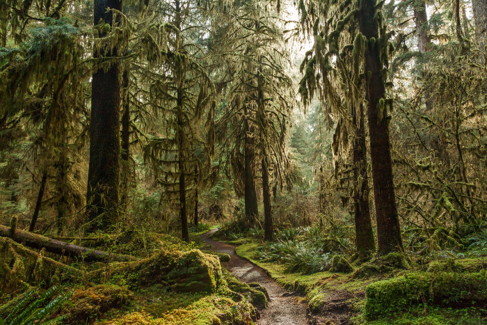 1. The only temperate rainforests in the contiguous U.S. are here in Washington.