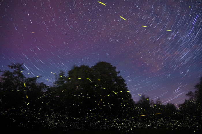 9. This long exposure reveals star trails and fireflies over Milo.