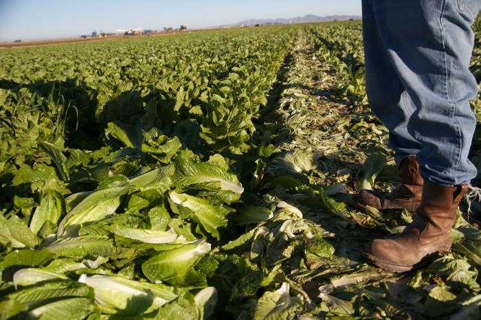 3. Lettuce production is key.