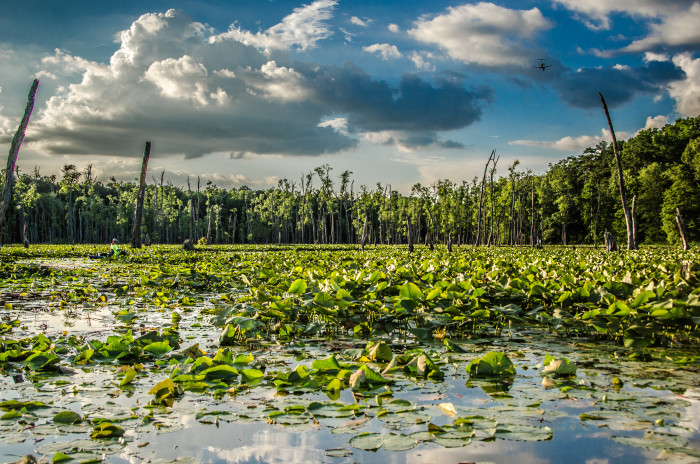 5. Wheeler National Wildlife Refuge - Decatur, Alabama