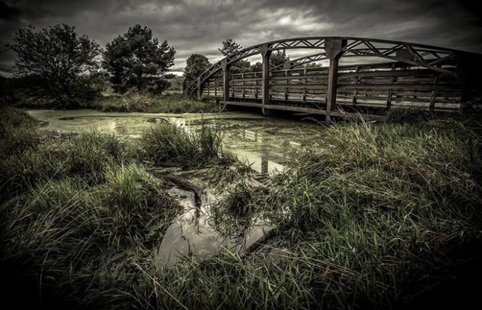 3. An ordinary footbridge over plant-choked water takes on a sort of mystical air in this photo.