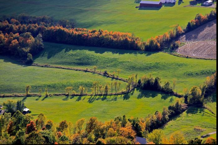 15.Grassland