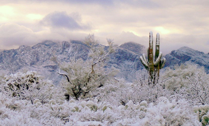 5. For a snowy retreat closer to home, you can also try visiting the Santa Catalina Mountains.