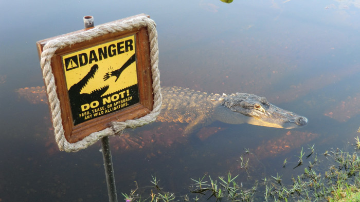 3. Florida is the only place on the planet where alligators and crocodiles coexist in the wild.