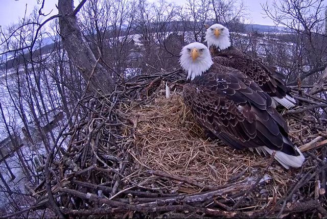 11. Fly like an eagle at Codorus State Park in Hanover.