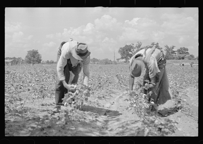 1. In August of 1935, two workers brave the heat in Pike County to do some cotton pickin'.
