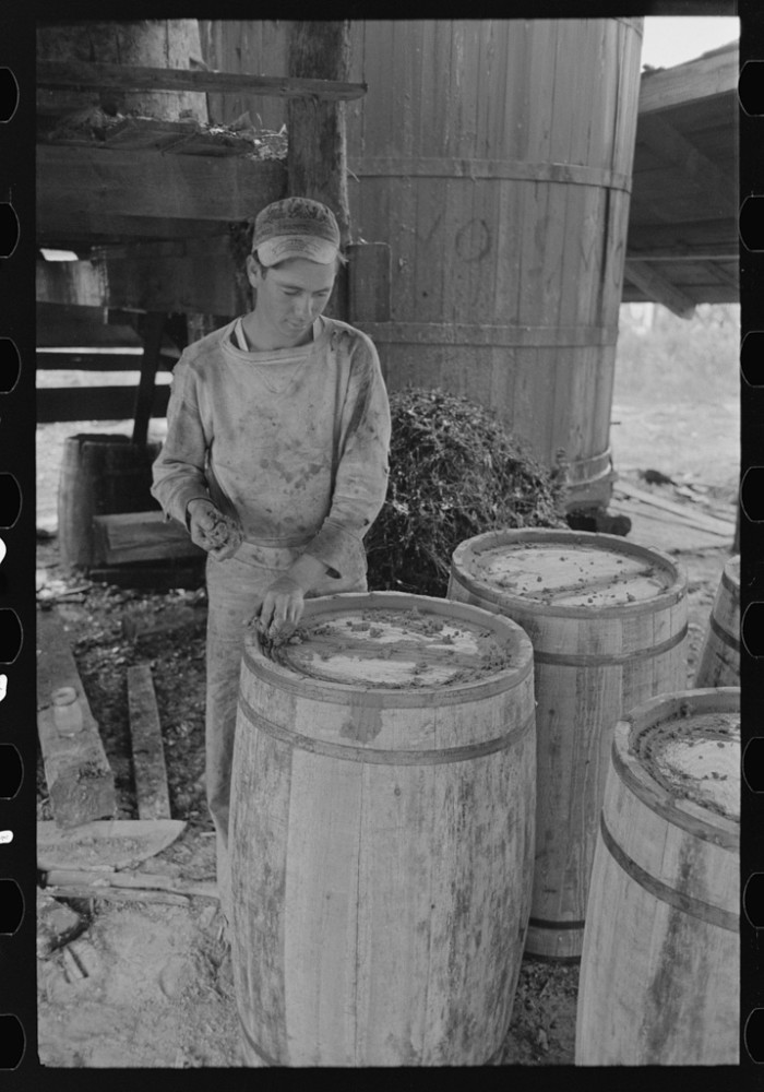 16. An employee at a turpentine still in State Line is hard at work caulking barrels for resin.