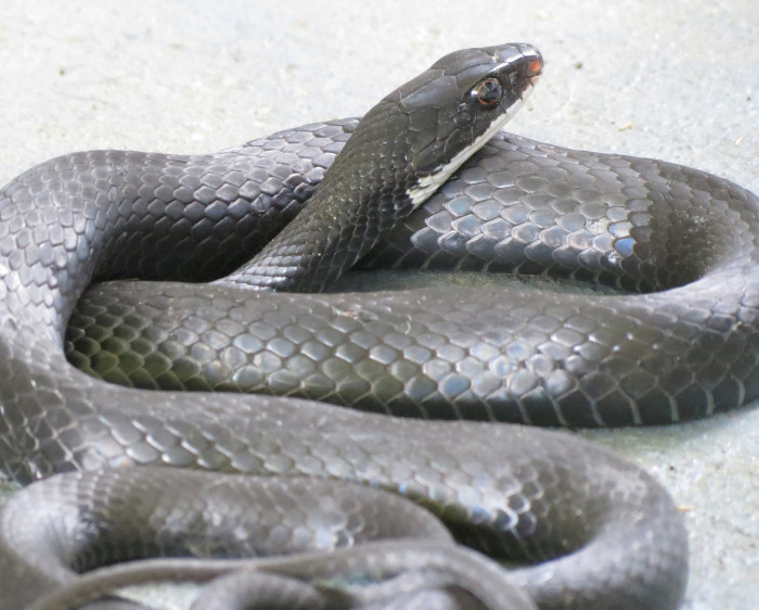 5. Annapolis couple purchased a snake-infested home.