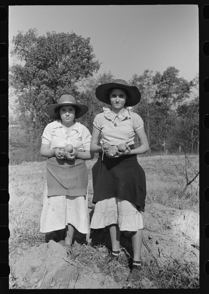 17. Daughters of a Laurel sharecropper proudly display their sweet potatoes.