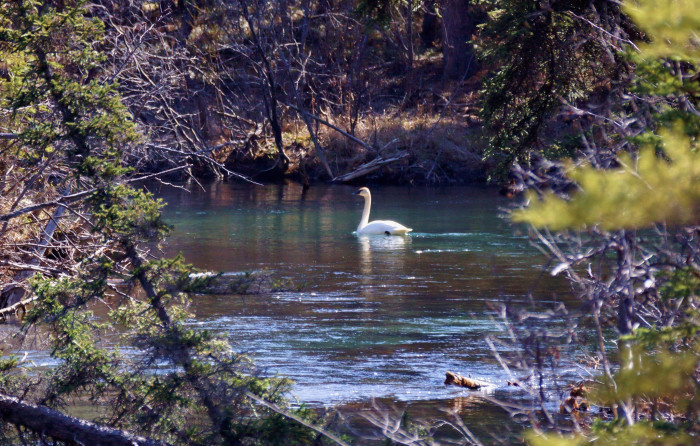 5) A gentle beauty gliding silently across the water.