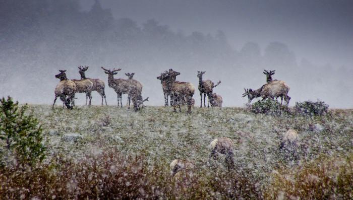 4. Wildlife watching.