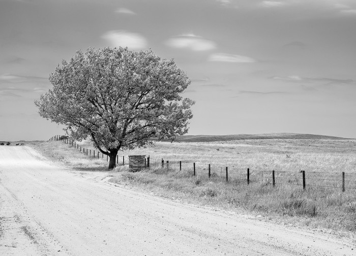 25. This tree north of Oshkosh looks almost like a lonely hitchhiker.