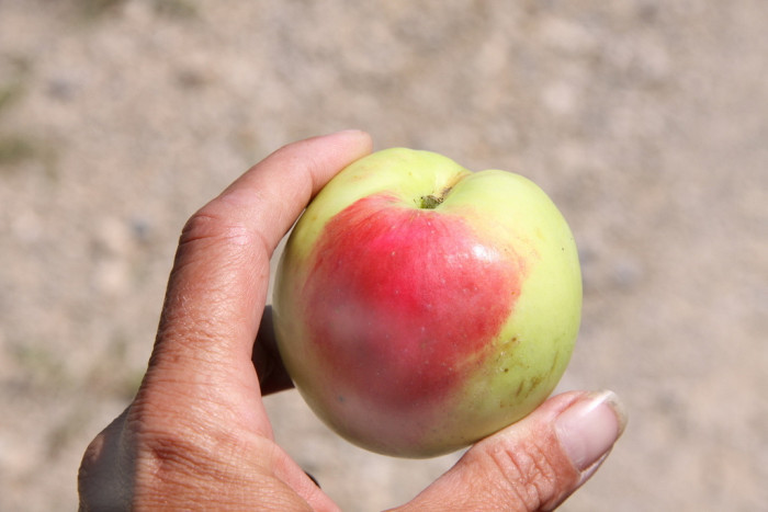 2.Taken an apple off of someone else's tree.