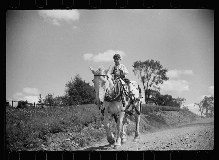 2.  Farm boy and horse east of Lowell, Vermont.