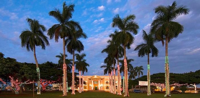 2) Christmas palm trees.