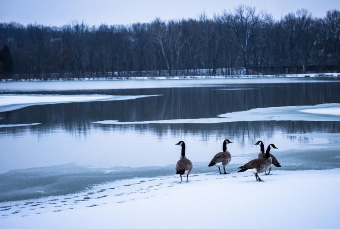 1.	Geese at Twin Lakes, Columbia