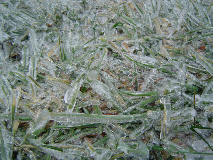 5. Each individual blade of grass is covered in its own sheath of ice. I love the crunch it makes when you step on it.