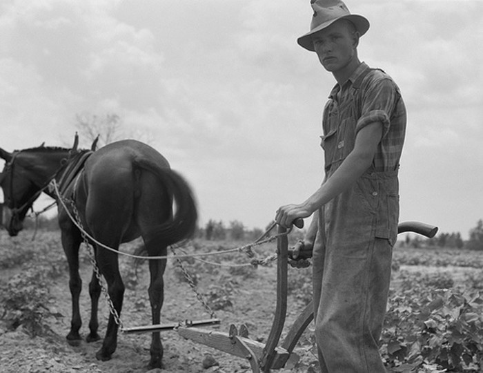 20. A sharecropper plows a field near Chesnee in 1937.