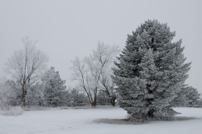 4. These snow-covered trees look so welcoming.